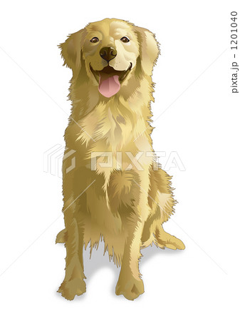 ゴールデンレトリーバー ドッグ Dog 犬のイラスト素材 Pixta