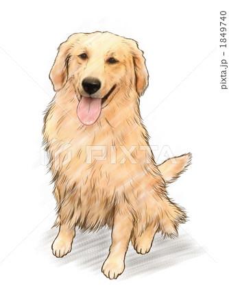 ゴールデンレトリバー 動物 犬 おすわりのイラスト素材 Pixta