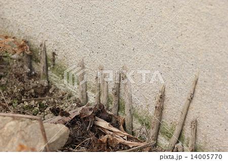 地蜘蛛の写真素材 - PIXTA