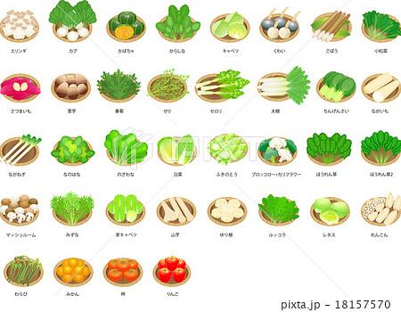 冬野菜のイラスト素材 Pixta