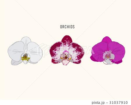 胡蝶蘭のスケッチのイラスト素材 Pixta