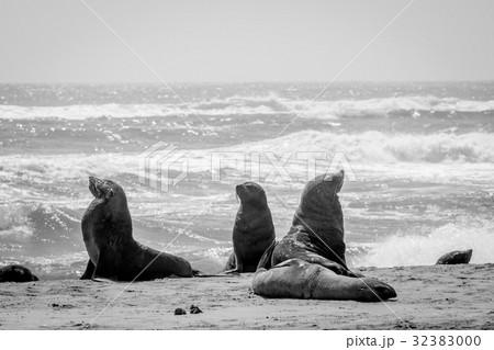Sea animals/Marine animals/Aquatic animals Photos - PIXTA