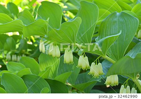 両性花の写真素材 - PIXTA