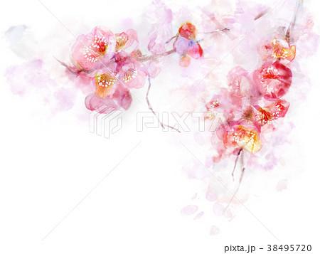 桜 春 リアル 美しいのイラスト素材 Pixta
