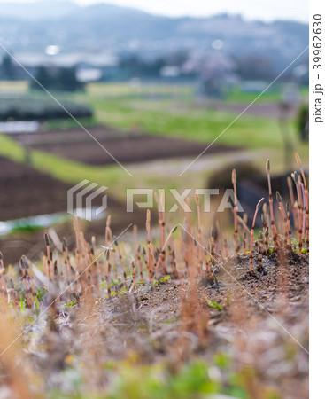 腹ぼての写真素材 - PIXTA