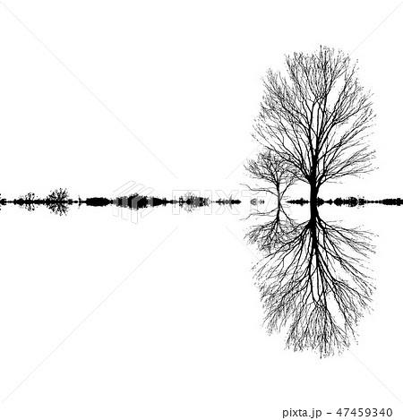 モノクロ 木 枝 シンプルの写真素材 Pixta