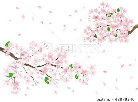 桜の花花びらのイラスト素材集 Pixtaピクスタ